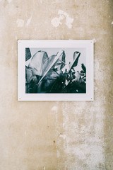Framed Photograph of Palm Leaves on Shabby Wall