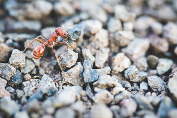 Macro shot of an ant carrying a rock