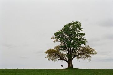 Bick oak on the horizon