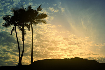 Black silhouette, coconut trees and twilight sky.