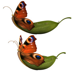 Butterfly leaf boat isolated on white. 3d render