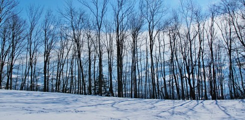 Baumreihe, winterlich kahl und transparent