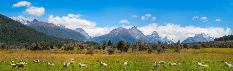 Panoramic Landscape scenery at Mount Aspiring National Park in New Zealand with meadows with sheep in the foreground