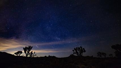 Звёзды,небо,Деревья