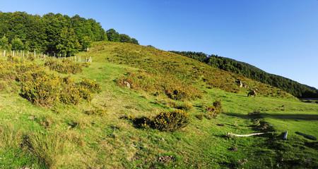 Pferdekoppel im Wald von Iraty in den französischen Pyrenäen
