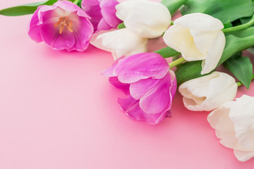 Bouquet made of white and pink tulips on pastel background. Spring background.