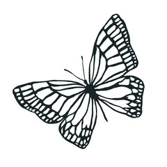 Isolated image of butterfly contours