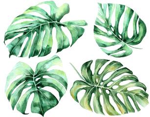 Tropical watercolor leaves set