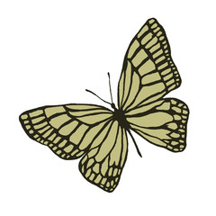 Isolated image of a butterfly in two colors