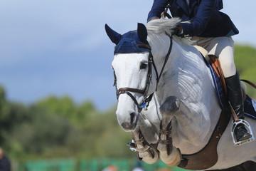 Papiers peints Equitation Schimmel springt über Hindernis