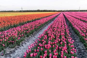 Foto auf Acrylglas Blumenhändler Tulpen uit Nederland.