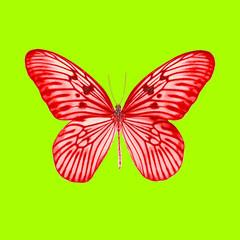 Красивая бабочка с большими красными крыльями в черных прожилках на зеленом фоне