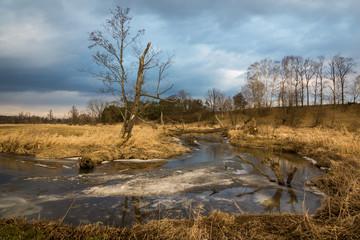 Landscape with tree and Jeziorka river at sunny day somewhere on Masovia, Poland