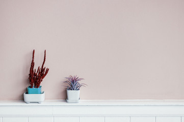 Tillandsia and Cactus in small pot on pastel blue wall background