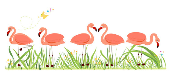 Flamingos. Exotic bird. Different poses