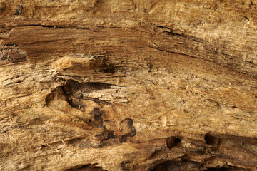 Rough wooden surface close up