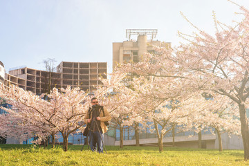 Man taking photos Sakura or cherry tree garden