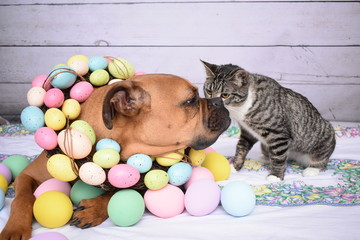 Easter portrait of a boxer dog and a tabby cay