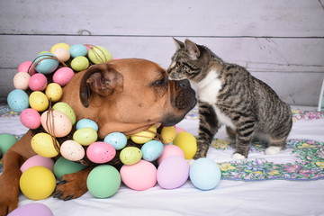 Easter portrait of a boxer dog and a tabby cat