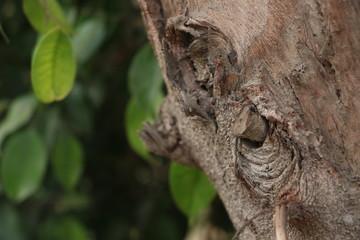 Part of tree
