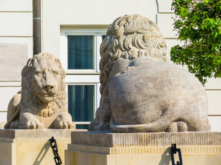 Stone statues of lions on the street of Warsaw