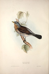 Illustration of a bird