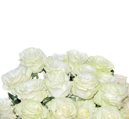 Beautiful floral background with white roses bouquet isolated on white
