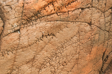 Scarface / A close up image, taken at Clachtoll in Scotland, of sedimentary rock that looks like it has stitching scar lines. 11 October 2015