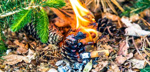 Waldbrand ausgelöst durch weggeworfene Zigarette