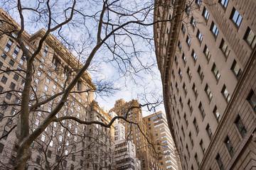 Fototapeta Skyscraper building through tree branches, Lower Manhattan, New York, USA