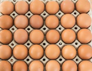Bioeier im Eierkarton gereiht