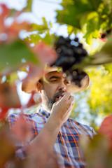 Tasting Grapes