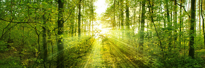 Trees pierce through the leaves of a warm spring sun