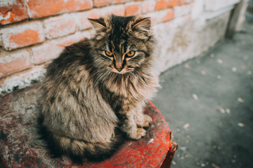 Fluffy multicolored cat sitting near the old walls of the house. Cat has interesting