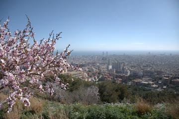 Árbol en flor con Barcelona al fondo