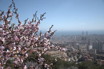 Almendros en flor con Barcelona al fondo