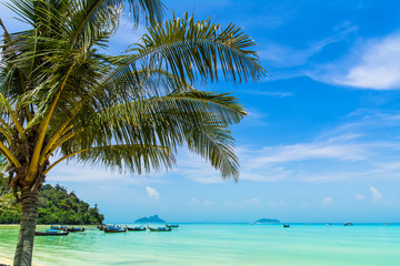 Amazing view of beautiful beach with traditional thailand longtale boats and palm tree. Location: Ko Phi Phi Don island, Krabi province, Thailand, Andaman Sea. Artistic picture. Beauty world.