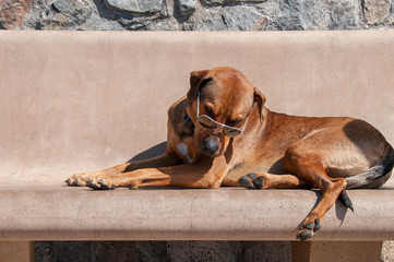 Glamorous Dog Pose