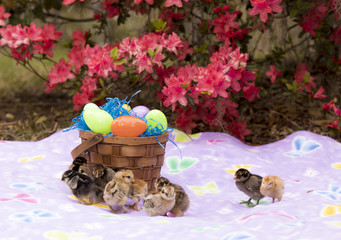 Easter basket and baby chicks with flowers.