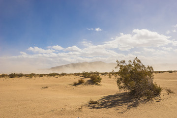 Desert creosote bush grows in the midst of the Mojave Desert in southern California.