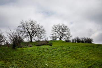 Winter time landscape image of Tree or green field, meadow with tree at winter time. Cloudy sky. Azerbaijan nature. Caucasus