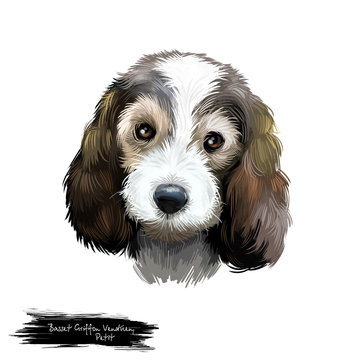 Petit Basset Griffon Vendéen or PBGV short-legged hound type French dog breed digital art illustration isolated on white background. Cute pet hand drawn portrait. Graphic clip art design