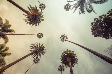 Palm trees, low angle shot. Vintage tone. Los angeles, Beverly Hills Wall mural