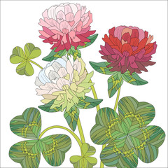 Flowers of red and white clover with leaves.