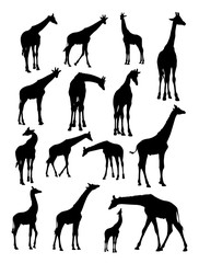 Giraffes animal detail silhouette. Vector, illustration. Good use for symbol, logo, web icon, mascot, sign, or any design you want.