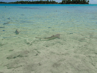Shark at blue lagoon