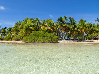 Tropical coconut tree island