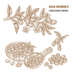 Goji berries on a branch. Hand drawn medical plant collection. Vector illustration engraved.