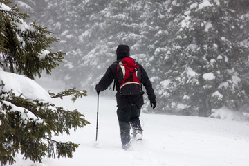 Traveler makes his way through snowdrifts in the forest during blizzards