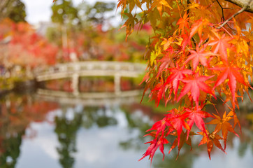 Autumn colorful red maple leaves with blurred image of bridge background at morning in autumn season from Kyoto, Japan, travel, nature, landmark and landscape concept